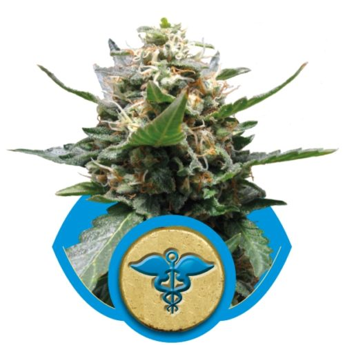 Royal Queen Seeds Royal Medic Fem