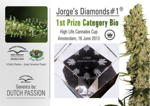 Dutch Passion Jorge's Diamonds #1 Feminised Cannabis Seeds