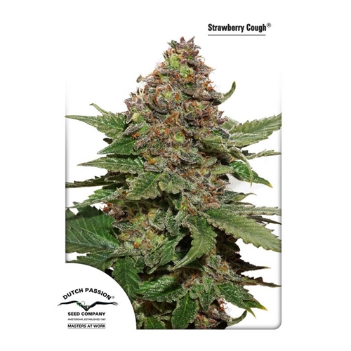 Dutch passions Strawberry Cough
