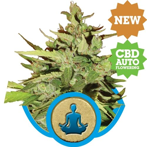 Royal Queen Seeds Stress Killer CBD Auto Fem